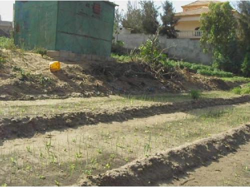terrain 5000 m vendre malika dakar a vendre un terrain de plus de 5000m2 malika dune. Black Bedroom Furniture Sets. Home Design Ideas