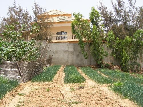 terrain 5000 m vendre malika dakar a vendre un terrain de plus de 5000m2 malika. Black Bedroom Furniture Sets. Home Design Ideas